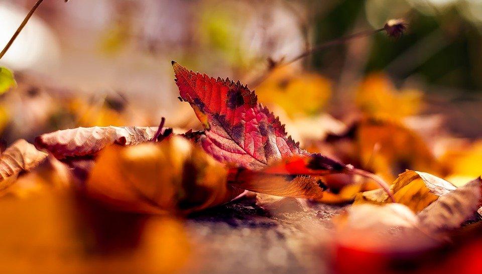 Caída de las hojas en otoño